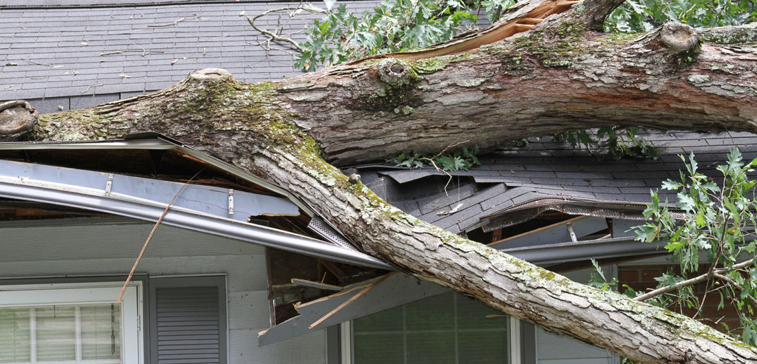 What Happens if my Neighbor's Tree Falls in My Yard?
